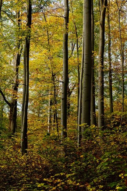 Tiro vertical de uma floresta com árvores folhosas amarelas e verdes Foto gratuita