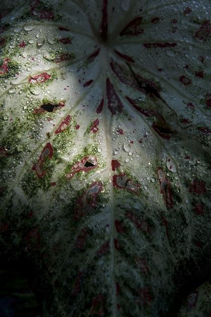 Tiro vertical do close up de uma folha com gotas da água nela Foto gratuita