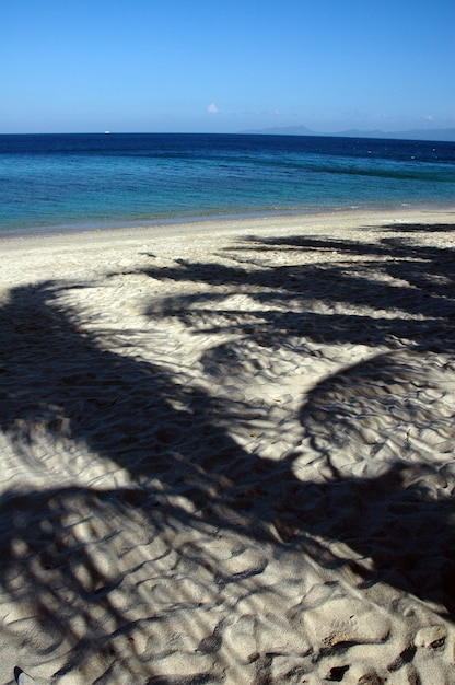 Tiro vertical do reflexo das palmeiras em uma praia arenosa Foto gratuita