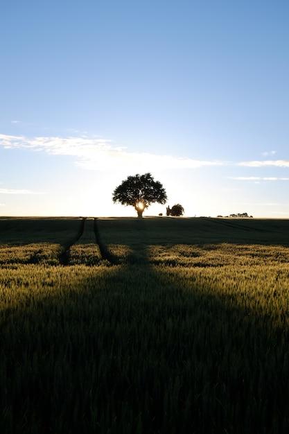 Tiro vertical do sol nascendo sobre um greenfield cheio de diferentes tipos de plantas Foto gratuita