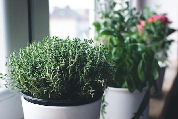 Tomilho, manjericão e outras ervas no peitoril da janela Foto gratuita