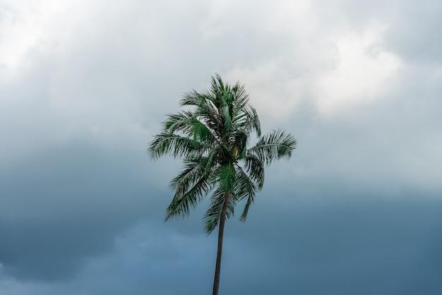 Topo de uma solitária palmeira verde com céu escuro Foto gratuita