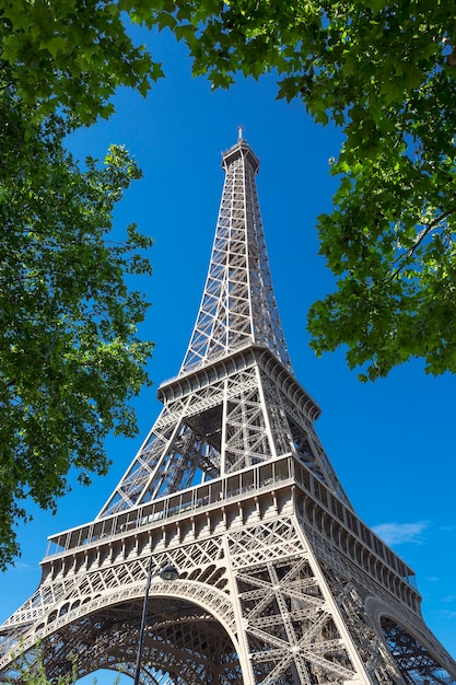 Torre eifel com árvore no céu azul, paris. Foto gratuita