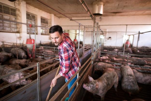 Trabalhador da fazenda limpando e mantendo chiqueiro e porcos limpos Foto gratuita