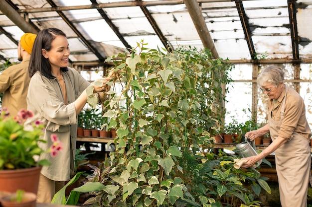 Trabalhadores de estufas de diferentes idades cuidando de plantas em um belo laranjal Foto Premium