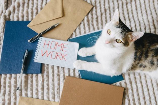 Trabalhe em casa, pastas, envelopes e gatos na cama. Foto Premium