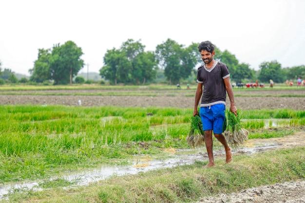 Trabalho indiano trabalhando no campo de arroz Foto Premium