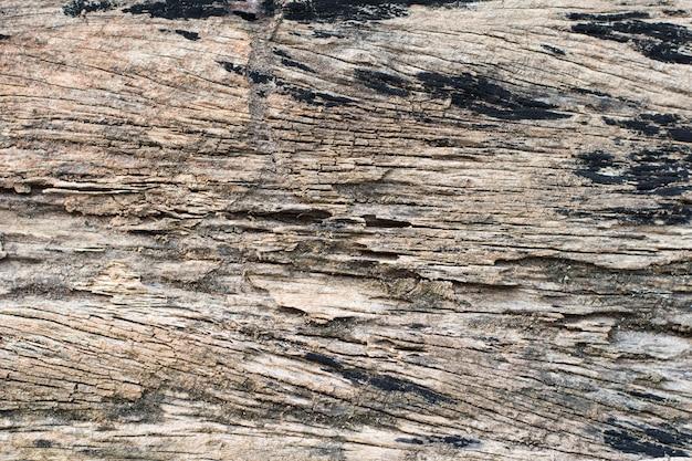 Traços de cupins comem madeira Foto Premium
