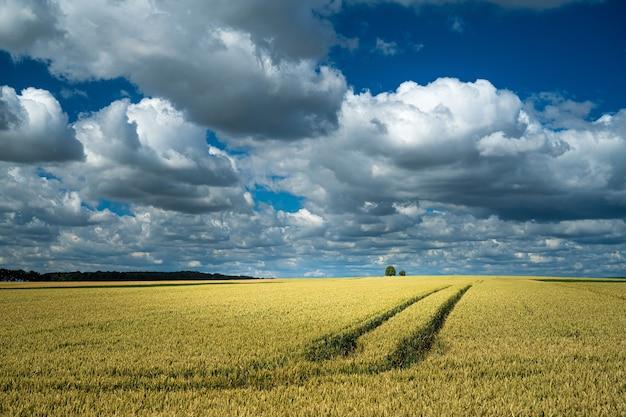 Traços de trator em um campo de trigo em uma área rural sob um céu nublado Foto gratuita
