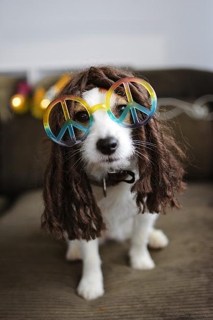 Traje do cão hippy. jack russell engraçado pronto para o carnaval ou o dia das bruxas. Foto Premium