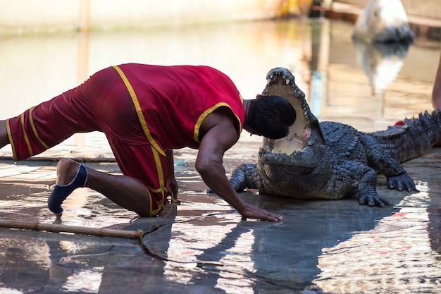 Treinador colocou a cabeça em mandíbulas de um crocodilo. espetáculo incrível animado na tailândia Foto Premium