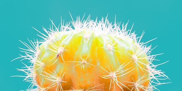 Trendy tropical neon cactus planta em azul Foto gratuita