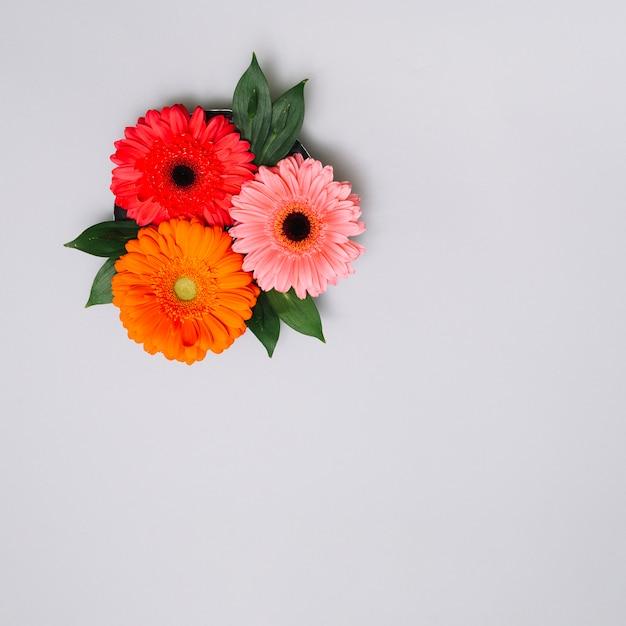 Três botões de flores com folhas na mesa Foto gratuita
