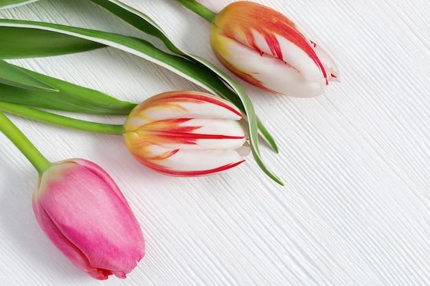 Três botões de tulipas florescendo multicoloridos em madeira branca Foto Premium