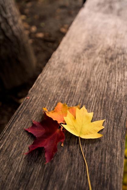 Três folhas de plátano do outono em amarelo, alaranjado e vermelho em um fundo de madeira. composição de outono Foto Premium