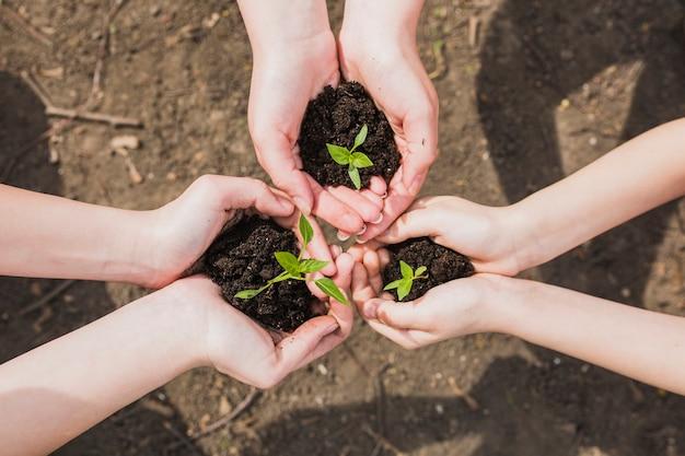 Três pares de mãos segurando plantas pequenas Foto gratuita