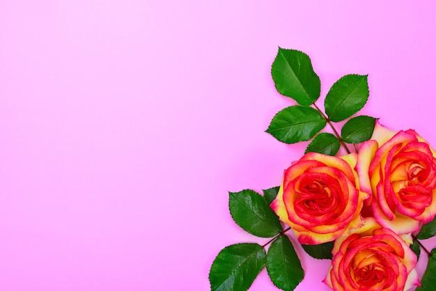 Três, rosas amarelas, com, verde sai Foto Premium