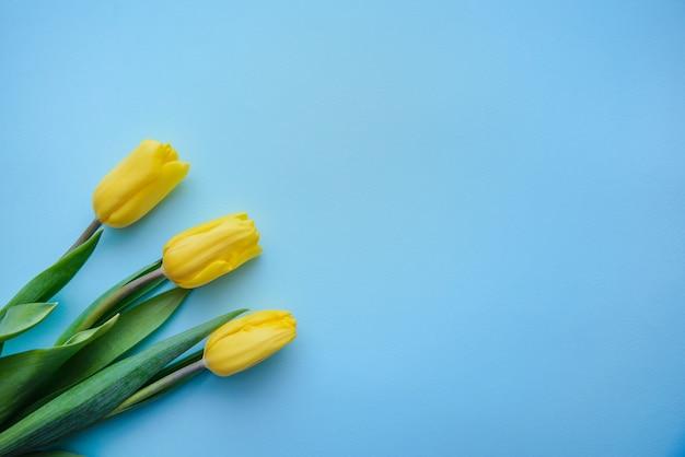 Três tulipas amarelas sobre fundo azul, com espaço de cópia Foto Premium