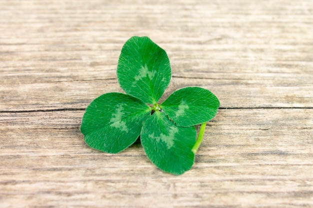 Trevo de quatro folhas sorte, trevo no antigo fundo de madeira retrô Foto Premium