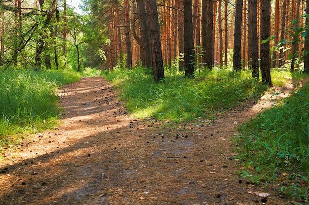 Trilha para pessoas na floresta verde. Foto Premium