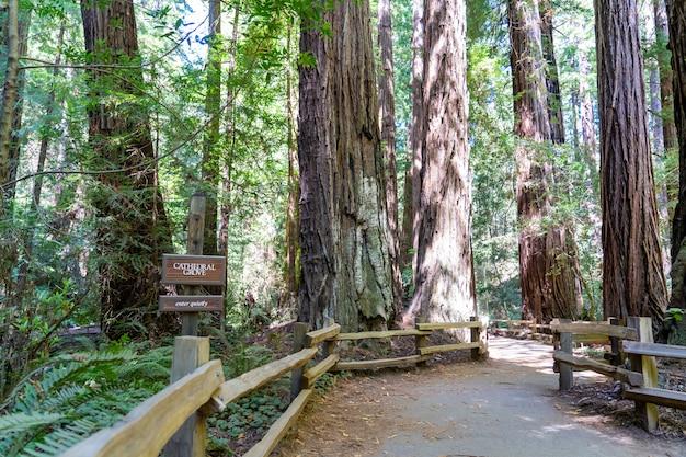 Trilhas para caminhadas por sequóias gigantes na floresta muir, perto de são francisco Foto Premium