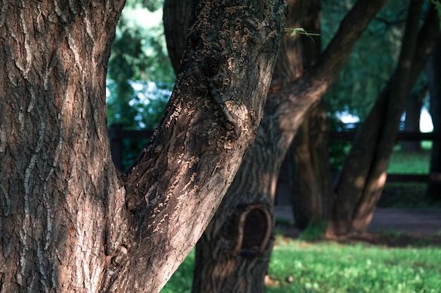 Tronco de árvore, gramado verde no parque da cidade sob a luz do sol Foto Premium