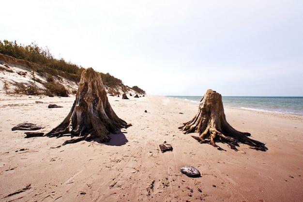Tronco de árvores mortas no parque nacional de slowinski. Foto gratuita