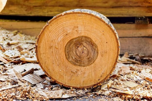 Tronco de madeira com casca Foto gratuita