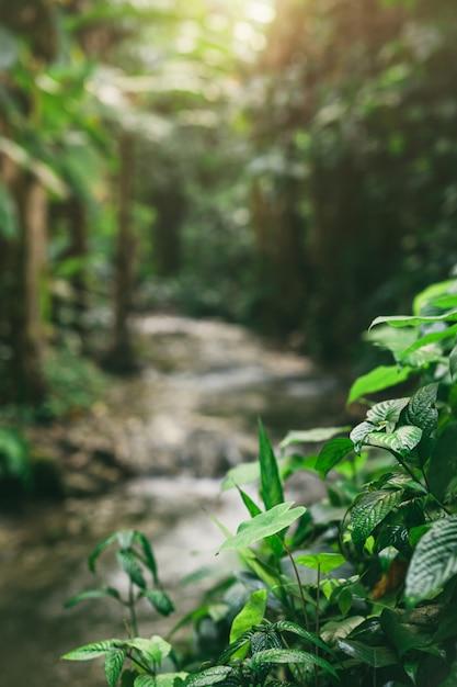 Tronco de rio pequeno na floresta tropical. Foto gratuita