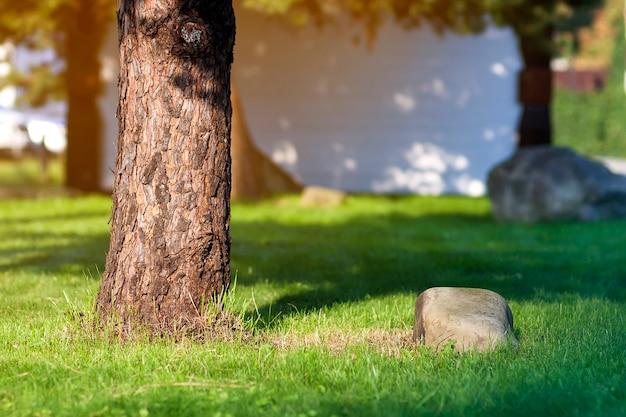 Tronco de uma árvore e uma pedra grande no empréstimo da grama verde. Foto Premium