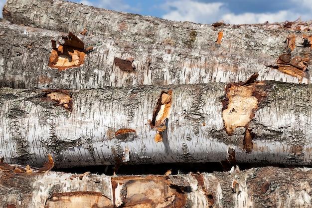 Troncos de bétula dispostos em frente à madeira em uma pilha, vista lateral de uma casca de plantas em preto e branco Foto Premium
