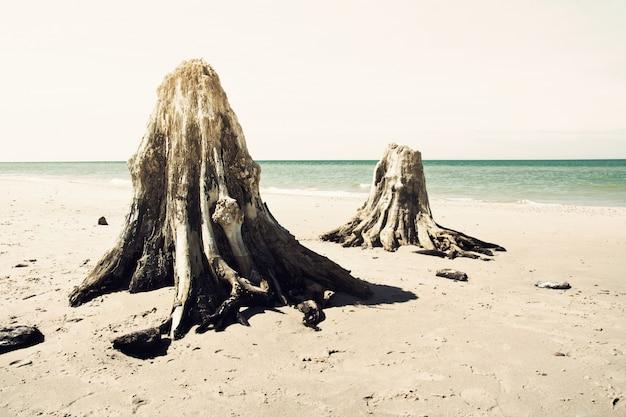 Troncos mortos na praia. Foto gratuita