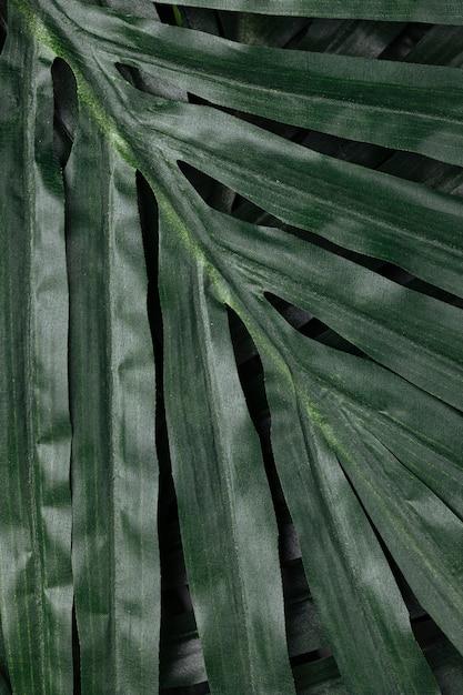 Tropical deixa closeup Foto gratuita