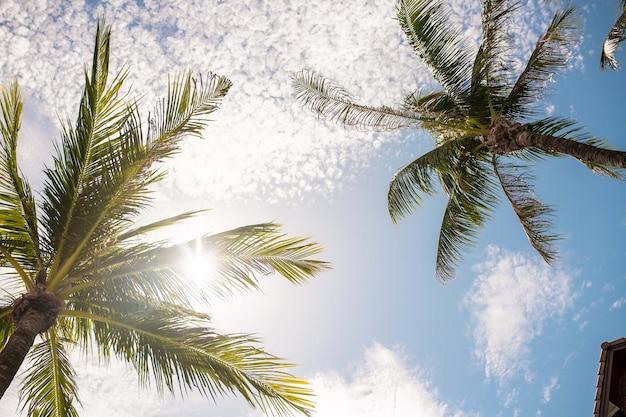 Trópico natureza paisagem paisagem de galhos de árvores de palma no céu azul com nuvens brancas fotografia de baixo Foto Premium