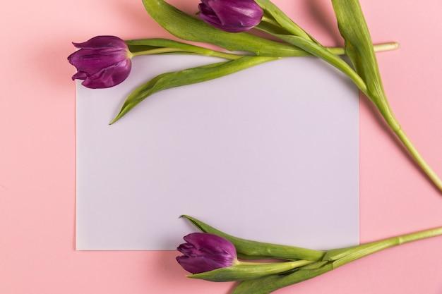 Tulipas roxas sobre o papel em branco branco contra fundo rosa Foto gratuita
