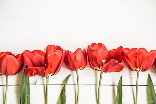 Tulipas vermelhas em fundo branco de madeira, em uma fileira, closeup, conceito flores da primavera Foto gratuita
