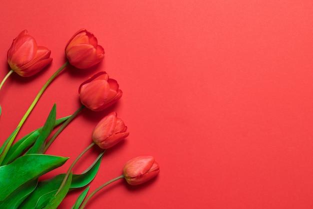 Tulipas vermelhas no vermelho com espaço para texto Foto Premium