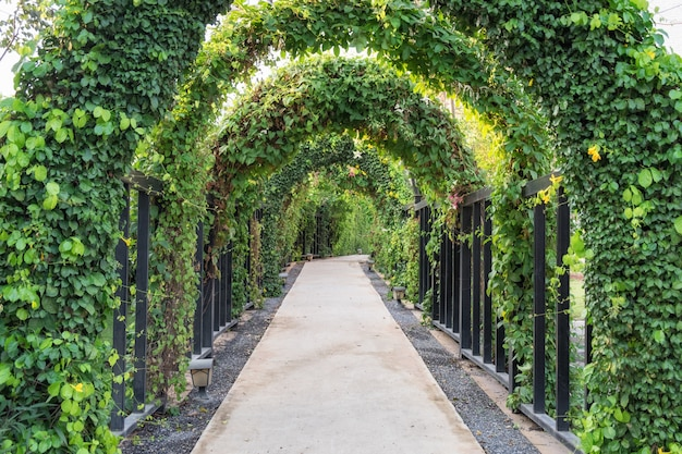Túnel caminho árvore verde obscuro Foto Premium
