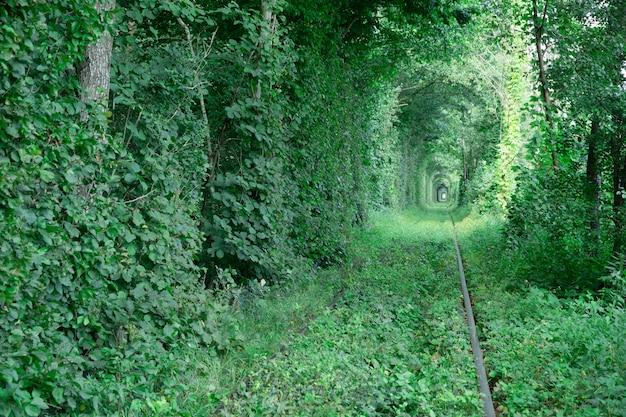 Túnel do amor Foto Premium