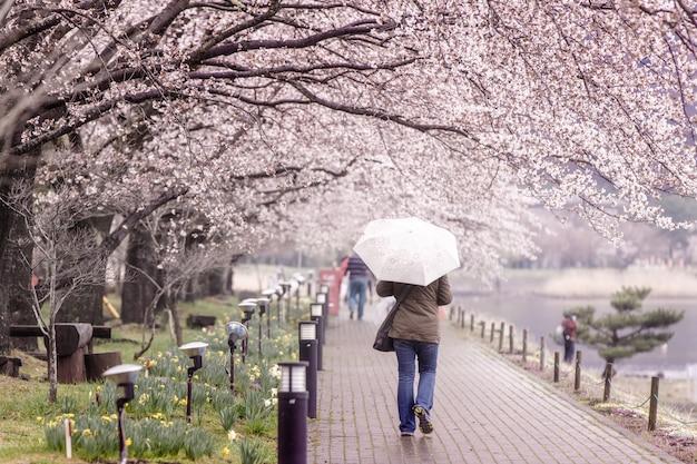 Turismo andando no caminho de flor de cerejeira no lago kawaguchi Foto Premium