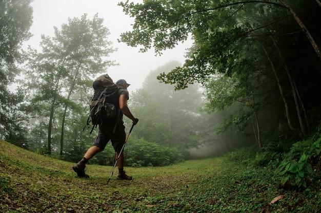 Turismo masculino com mochila andando pela floresta Foto Premium