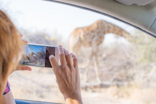 Turista fotografar girafa de carro enquanto em auto-drive safari dos animais selvagens Foto Premium