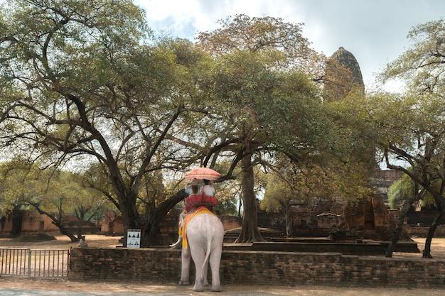 Turista, ligado, elefante, sightseeing, em, ayutthaya, histórico, parque, ayutthaya, tailandia Foto Premium