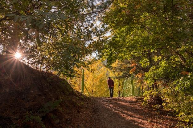 Turista que visita no jardim da árvore de ginkgo no outono no pôr do sol em hongcheon Foto Premium