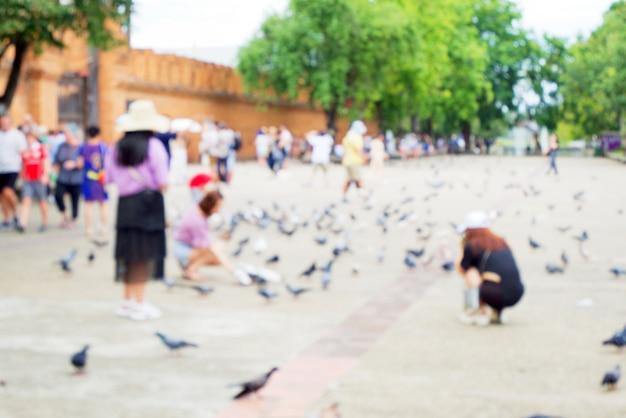 Turva de pessoas alimentando pombo ou pomba (columba livia) aves e caminhadas Foto Premium