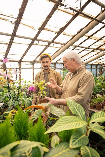 Último homem mostrando folhas de plantas doentes e explicando ao jovem trabalhador como borrifar folhas de pesticidas Foto Premium