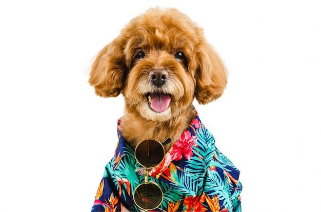 Um adorável cão poodle preto vestindo camisa havaiana e óculos de sol Foto Premium