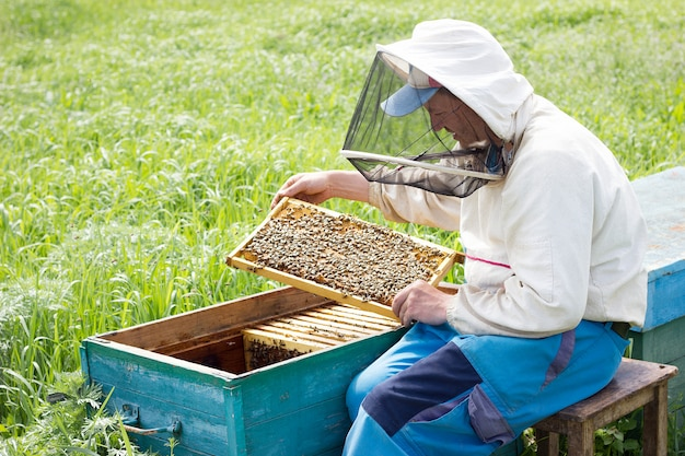 Um apicultor trabalha para coletar mel. conceito de apicultura. apicultor trabalha com quadros de mel Foto Premium