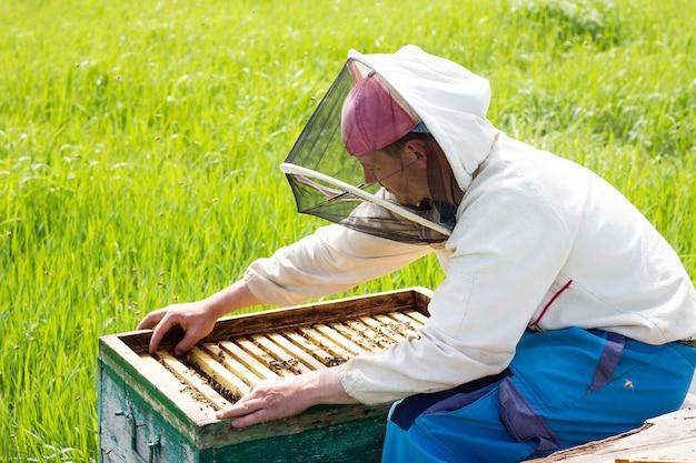 Um apicultor trabalha para coletar mel. conceito de apicultura. trabalhar no apiário Foto Premium