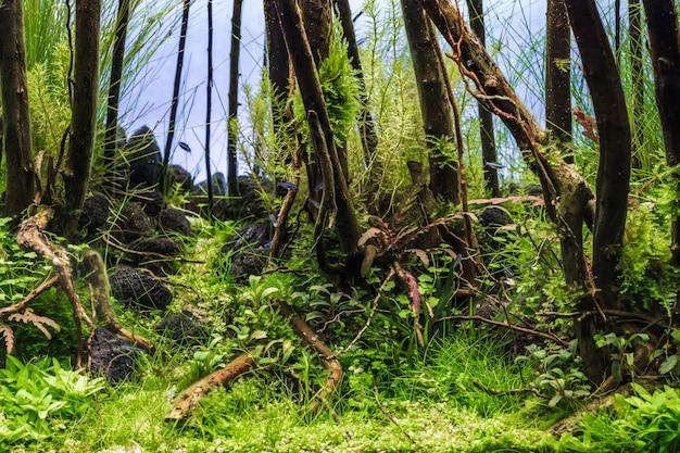 Um aquário plantado verde tropical de água doce bonito com peixes tropicais. Foto Premium
